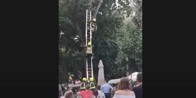 VIDEO: INTERVENCIJA U ĐARDINU POŠLA PO ZLU Vatrogasca udarila grana