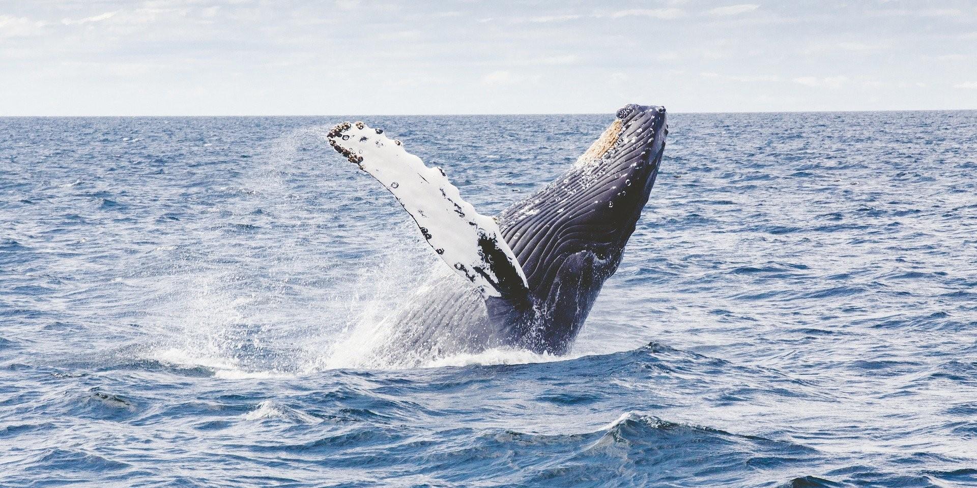 NEVJEROJATNO: Bio sam kitu u ustima! Cijelog me progutao pa me iskašljao