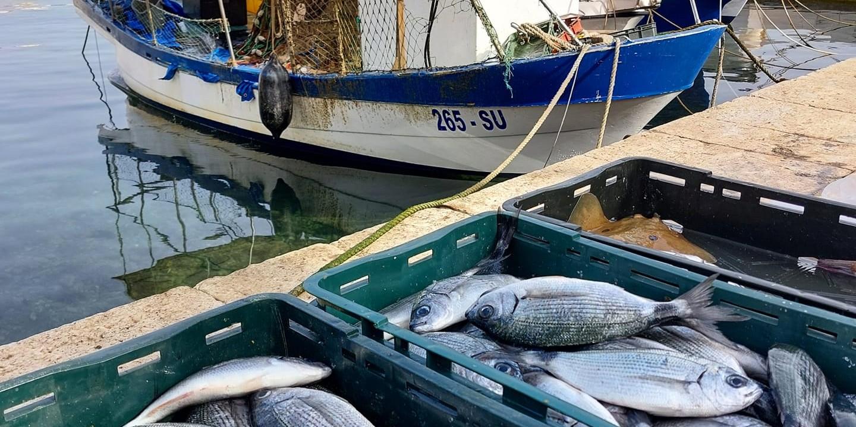 Posjetite Fantažiju o' ribe: Prvi od osam festivala posvećenih ribi u Sutivanu!