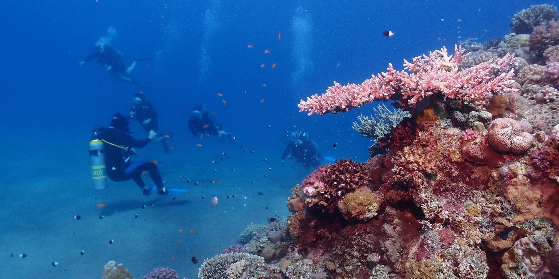 ALARMANTNO Crveni koralj se nemilice uništava, potrebno je hitno zaštititi kolonije