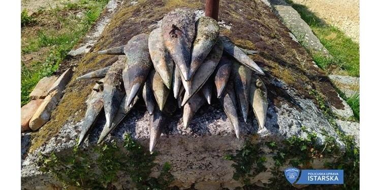 STRAVIČAN EKOCID Poljak u Istri izvukao 26 periski iz mora