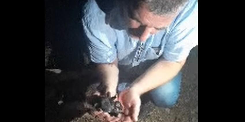ZLOČIN KRAJ SINJA: U plastičnoj vrećici netko je u smeće odbacio sedam tek okoćenih štenaca